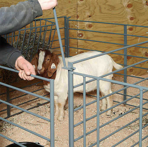 Small Portable Goat Pens – Jerusalem House